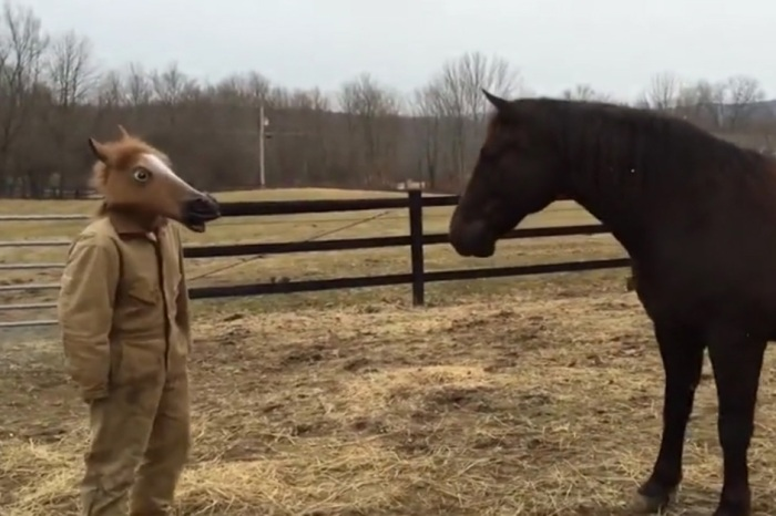 Horse Gets Spooked by Man Wearing Creepy Horse Mask