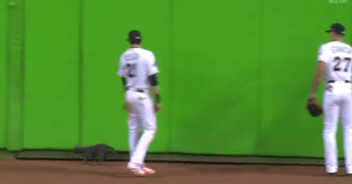 A cat roaming center field stole the show during a Major League Baseball game