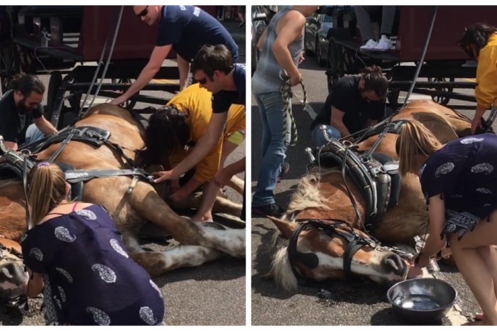 A saddening video shows the effects of running carriage horses in hot weather