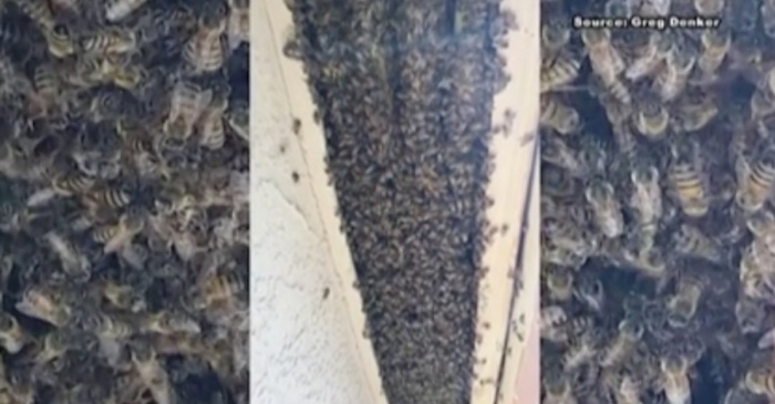 What an Arizona homeowner found in her attic had the whole neighborhood buzzing in the worst way