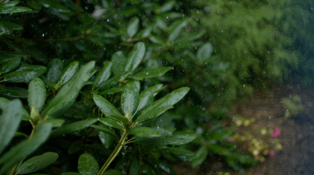 5 reasons to love the rain