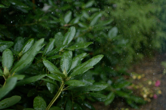 5 reasons to love the rain