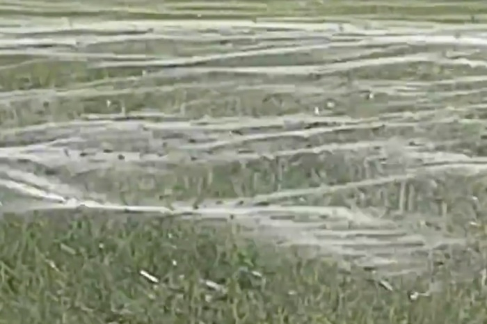 The crazy thing thousands of spiders did to escape floods has the web amazed and terrified