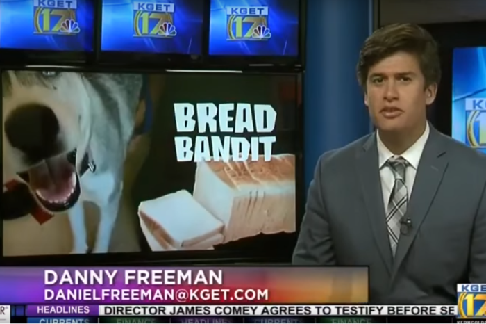 This local news crew's segment on a four-legged bread thief is full of tongue twisters and perfect puns