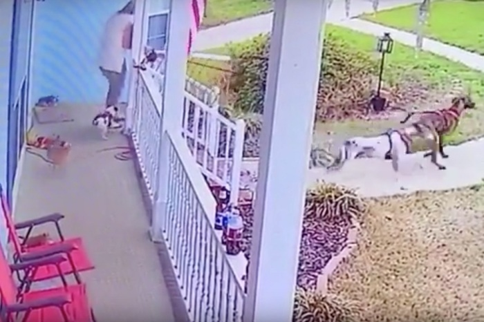 A woman went flying off the porch when her gigantic Great Danes ran and she didn't let go