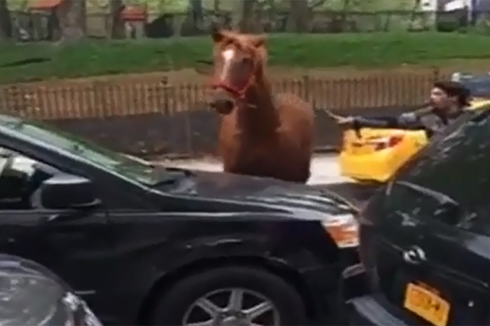 A carriage horse got loose during rush hour in midtown Manhattan