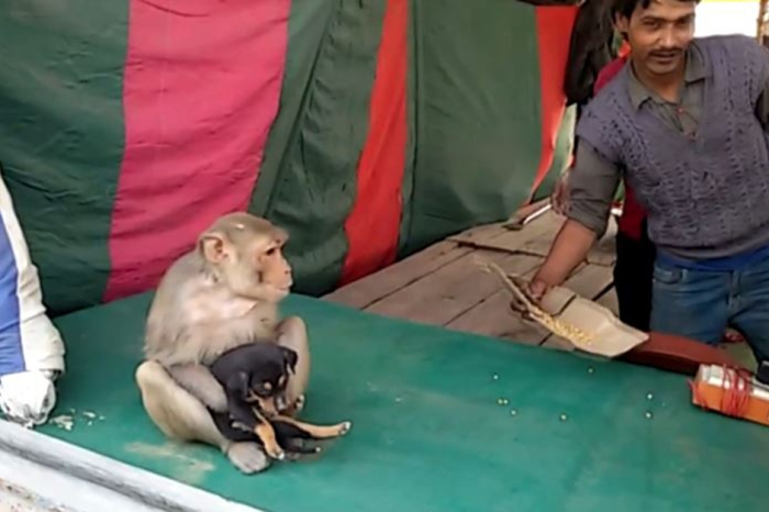 Watch this adorable monkey play mama to a stray puppy