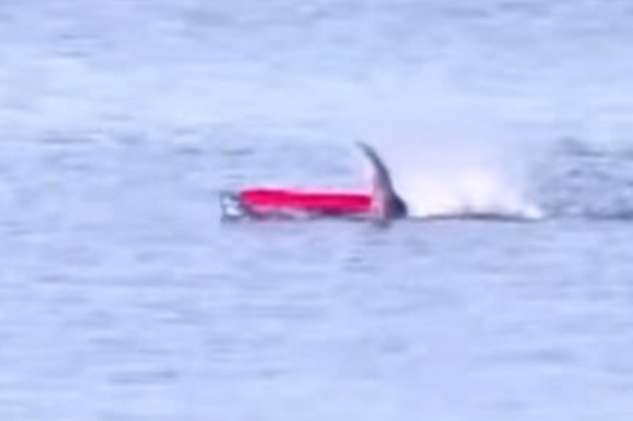 Great White Shark Pops Up and Rips Kayak to Pieces As Man Barely Escapes