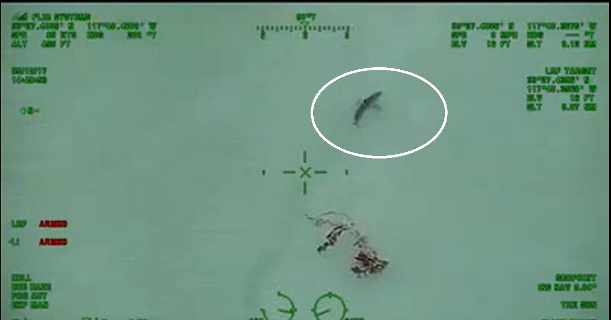 Dozens of Great White Sharks swarm near California beachgoers