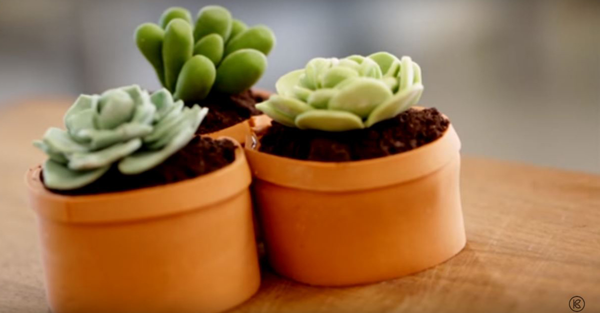 Learn how to create the newest dessert trend — succulent cakes