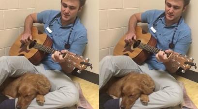"Vet Sings Elvis Presley's ""Can't Help Falling in Love"" to Soothe Scared Pup"