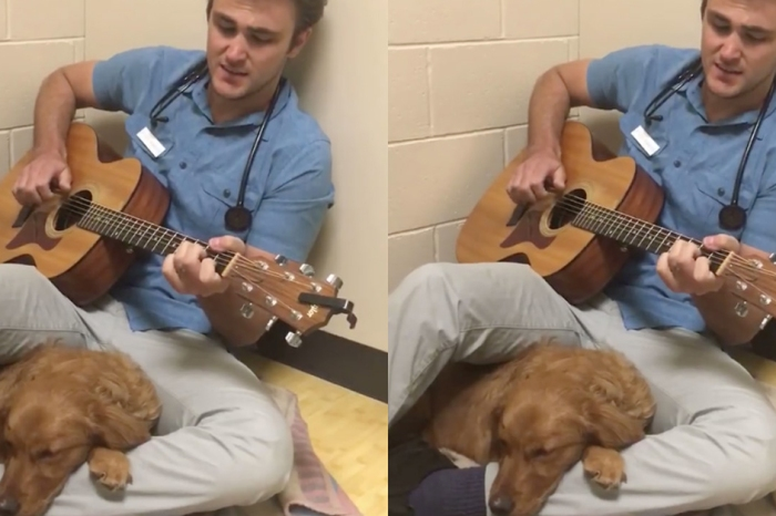 "Vet Sings Elvis Presley's ""Can't Help Falling in Love"" to Soothe Scared Pup"