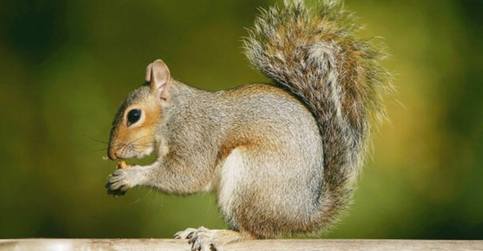 Savvy squirrel who foiled burglary says farewell to his human family