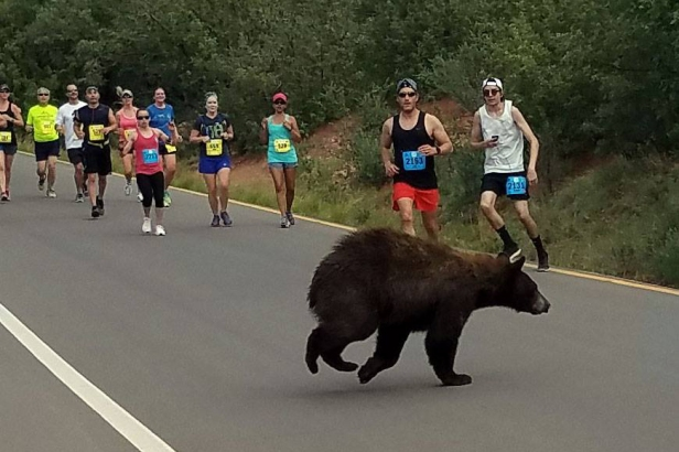 Runners Stopped Dead in Tracks When Bear Interrupts Race