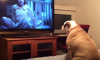 Dog Watching Scary Movie