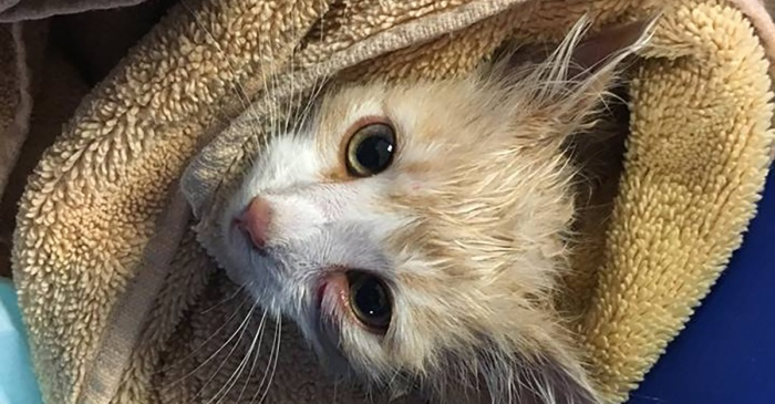 No one knows how a kitten ended up in the middle of the Golden Gate Bridge