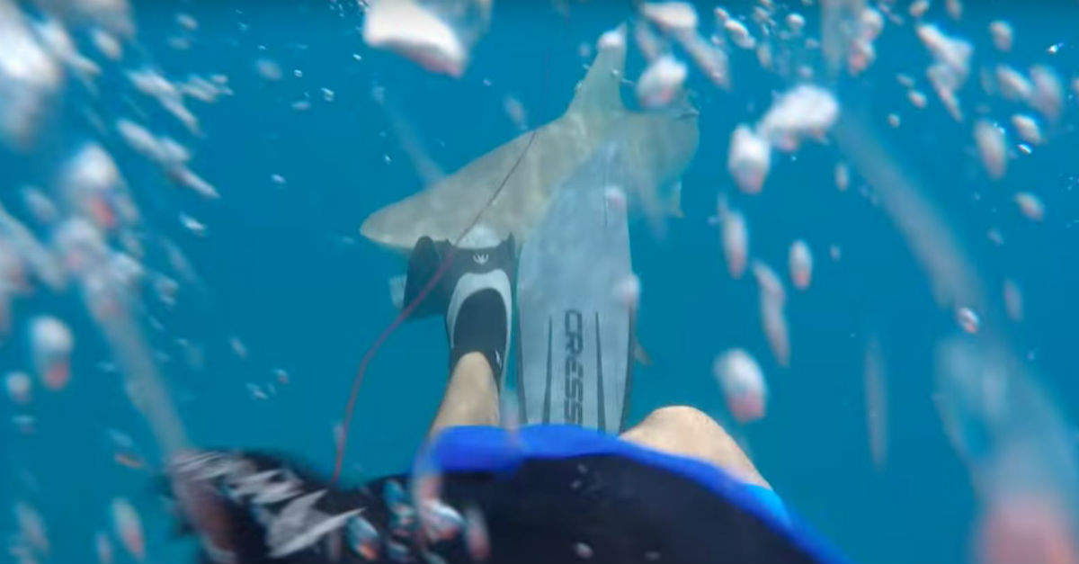 It was a typical day of spearfishing for this guy until a shark decided he needed some human for lunch