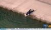 drowning dog