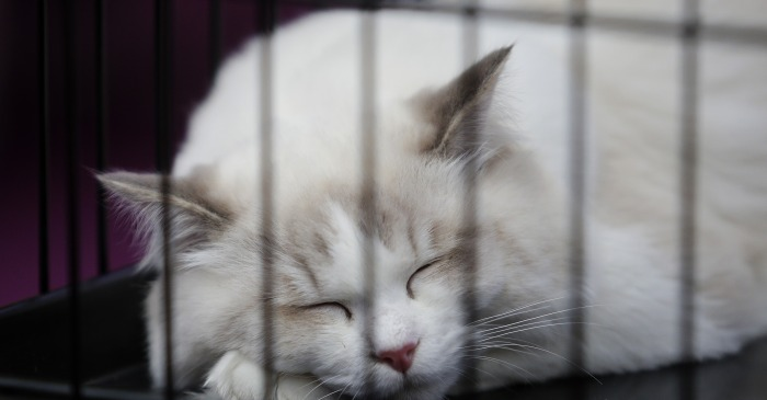 Here is our two week notice — we're all quitting our jobs to cuddle cats for a living