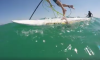 giant squid and paddleboarder