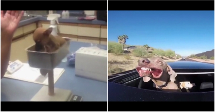 All your problems will fade away once you start watching this crazy dog montage