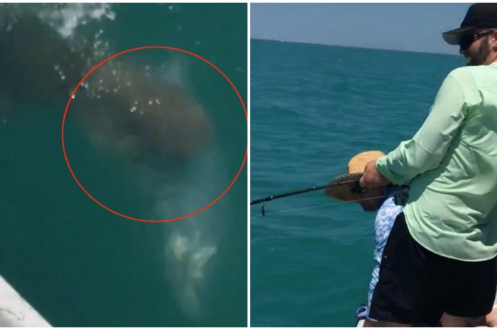 Blood in the water: man reels in big catch for 45 minutes only to see sharks destroy it in seconds