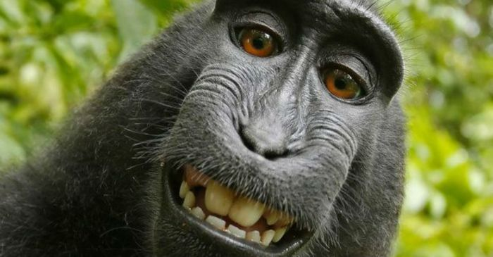 PETA is actually fighting in federal court to prove that this monkey owns the copyright to his selfie