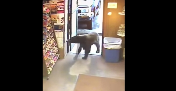 So, a bear wanders into an Alaskan liquor store — and this is no joke set-up