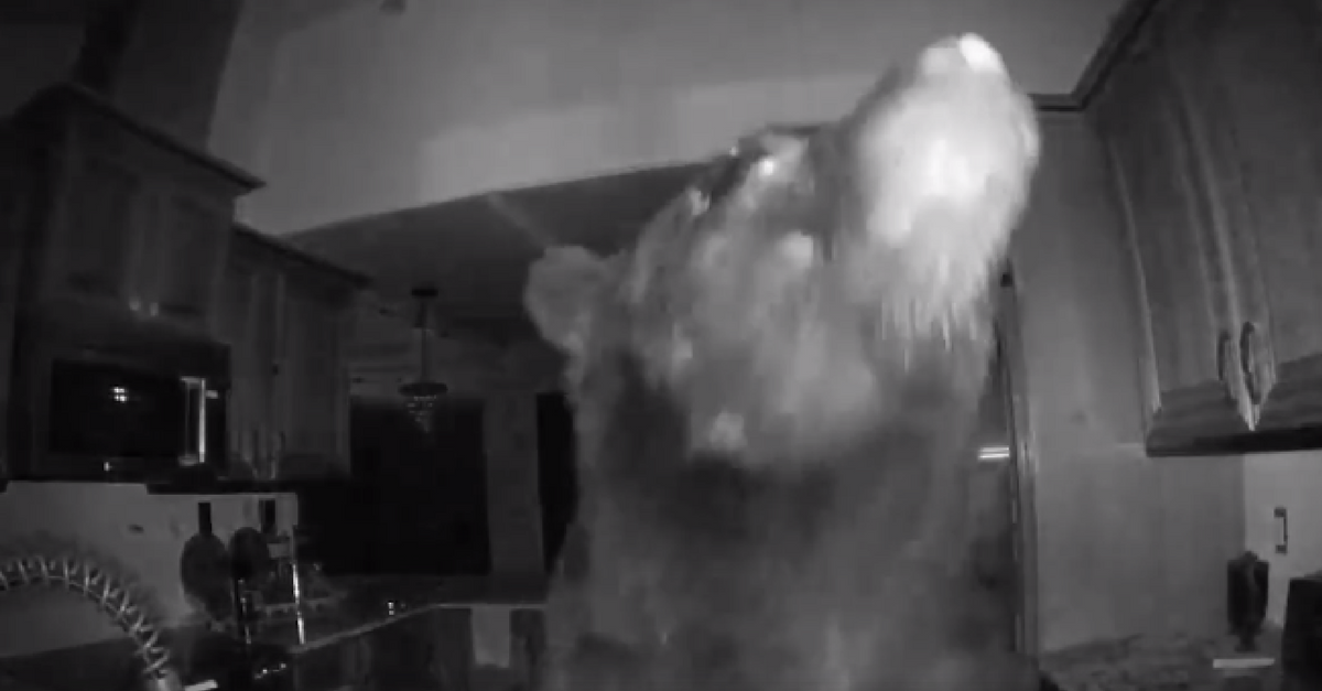 Man Checks Security Footage And Finds Huge and Hungry Overnight Visitor
