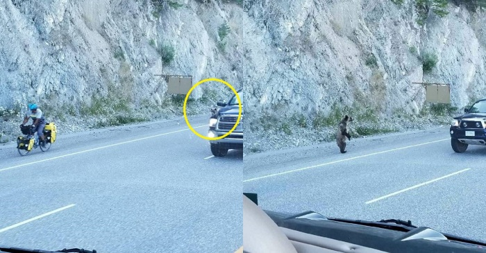 RVers help stop a bear as it chased down a cyclist, and their photos are just wild