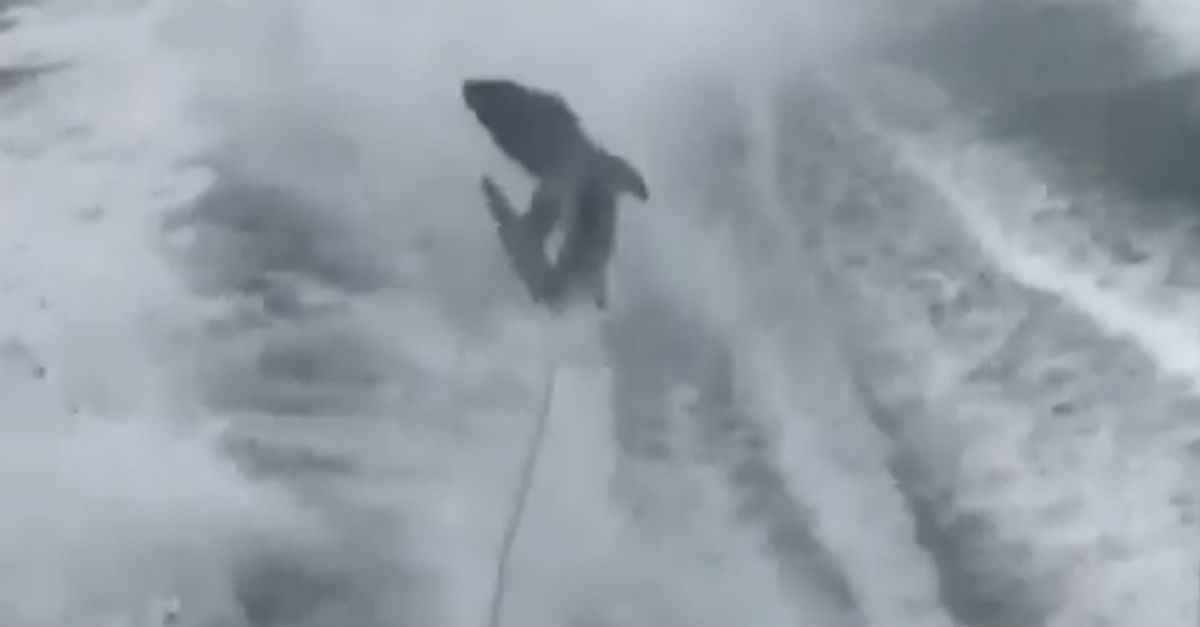 Men caught on video heartlessly dragging a shark behind their boat enter their pleas to the cruel crime