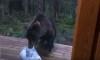 finnish garbage bear
