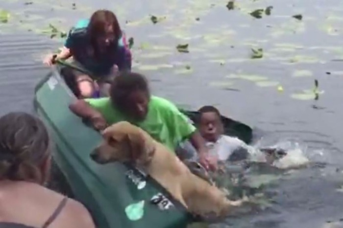 A Golden Retriever that was eager to get back to shore capsizes canoe