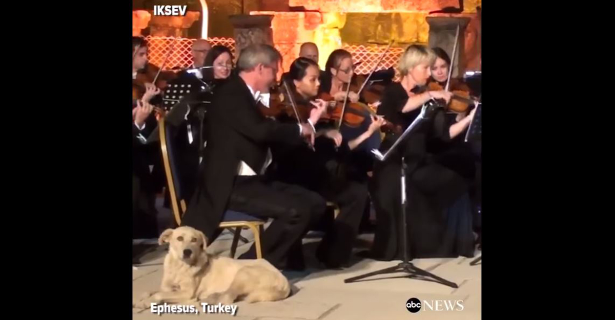 Watch the hilarious moment a dog crashed a symphonic performance