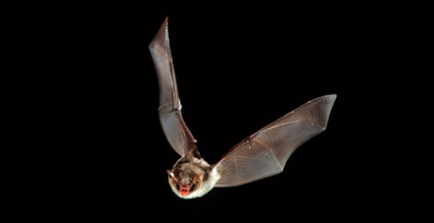 Officials released a warning about bats after two more were found with rabies in Naperville
