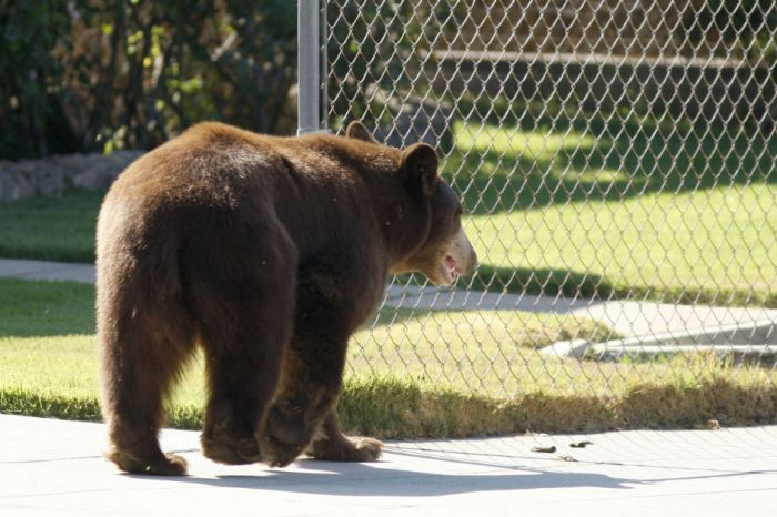 Human throws the first punch after a 250-pound bear follows a two-year-old inside house