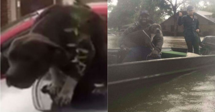 Good Samaritans save a terrified dog from rising waters after a failed rescue attempt
