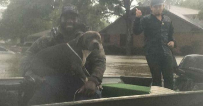 Even Harvey's floods couldn't stop these locals from performing selfless animal rescues