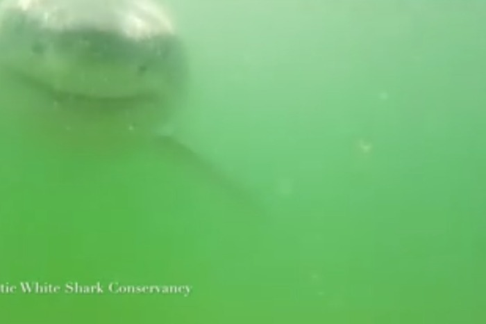 Shark Week's not over yet, apparently, as a Great White was spotted off the coast of Cape Cod