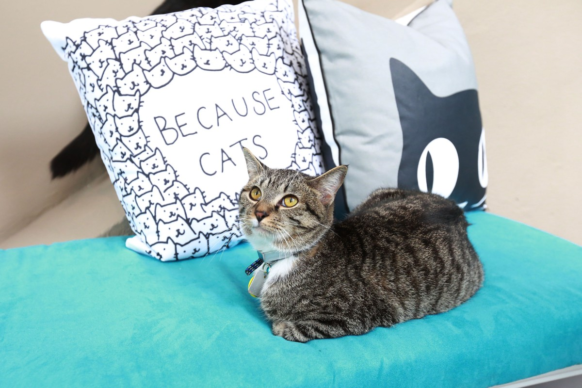 Cat Cafe in Bucktown is set to open just in time for Halloween
