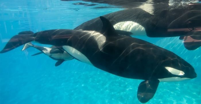SeaWorld has just suffered another giant loss with its third tragic death in 2017
