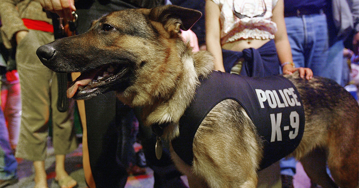 A police dog in Arkansas has died, but the circumstances surrounding its death are strange