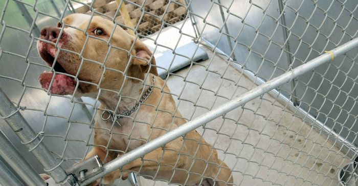 'No-kill' animal shelter admits to euthanizing at least 7 healthy dogs