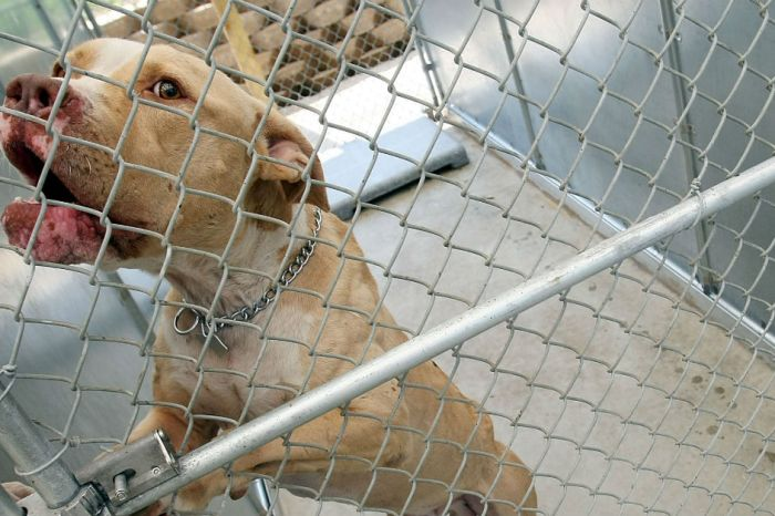 Meet the organization saving dogs from the crimes of their owners