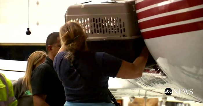 More than 100 dogs near Houston have been airlifted out of harm's way