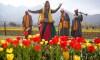 India Kashmir Tulips