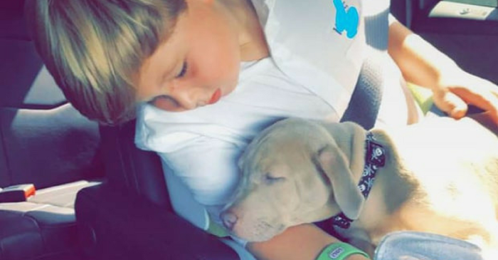 Kim Zolciak-Biermann surprises son Kash with a puppy months after a dog attacked him