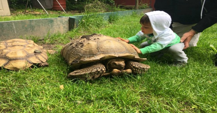 A Queens man confessed to his part in the theft of a rare tortoise after selling it to an unsuspecting buyer
