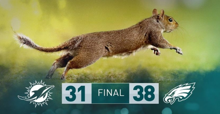 A squirrel ran onto the field of a football game and took everyone by storm
