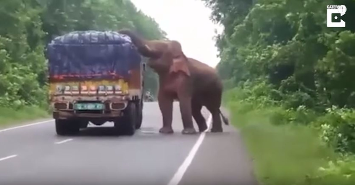 A man driving a truck full of potatoes in India got a surprise visit from an elephant